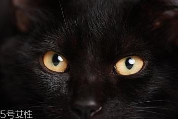 美瞳基弧过小有什么危害 容易引起眼睛炎症