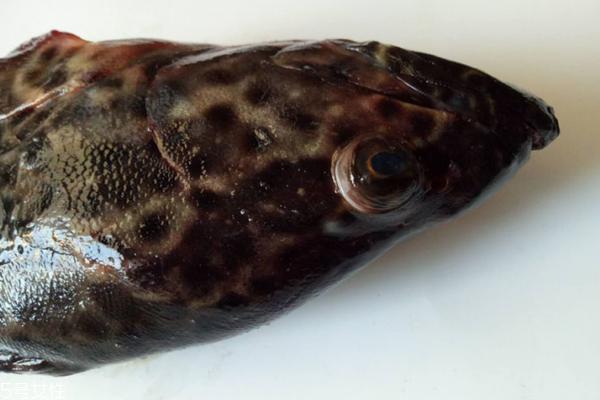 石斑鱼多少钱一斤 分为三种