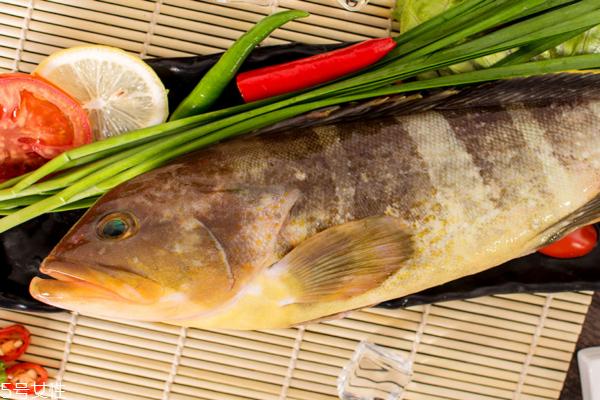 石斑鱼为什么这么贵 原来贵在这里