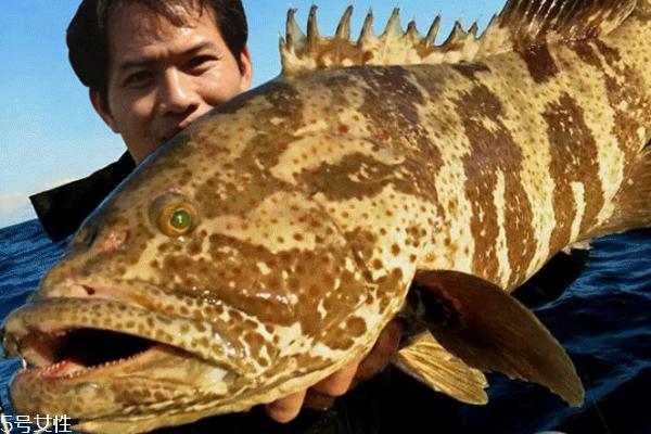 石斑鱼清蒸几分钟 6到8分钟最好