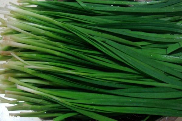 韭菜为什么要割三次 种韭菜必须知道这些