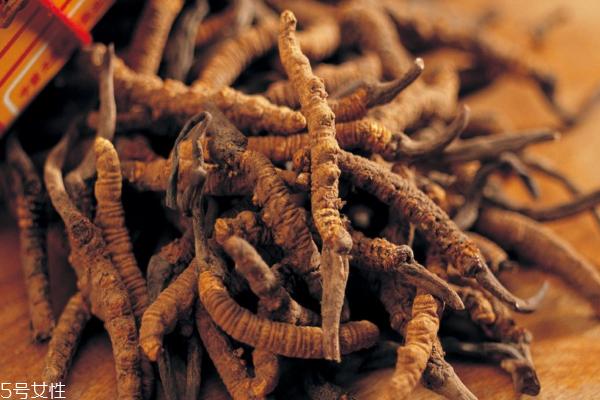 冬虫夏草怎么吃最好 吃虫草一定要看