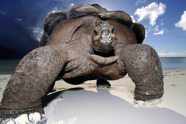 乌龟怎么杀 简单方法教给你