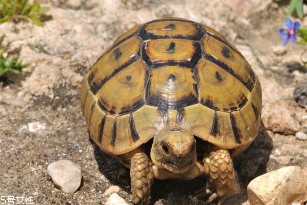 乌龟吃什么 杂食性动物