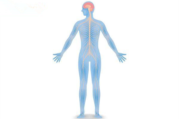 什么是自律神经失调 自律神经失调可以吃补吗