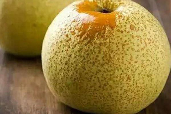 最大的梨是砀山梨吗?砀山梨的功效与作用