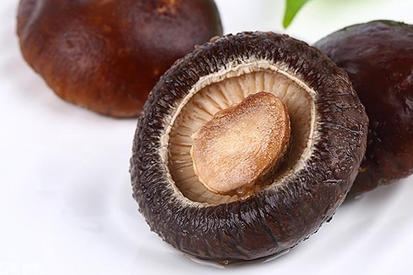 泡水的香菇怎么保存 最好尽早食用完