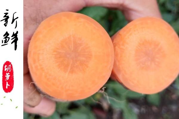 胡萝卜为什么对眼睛好 因为这个成分