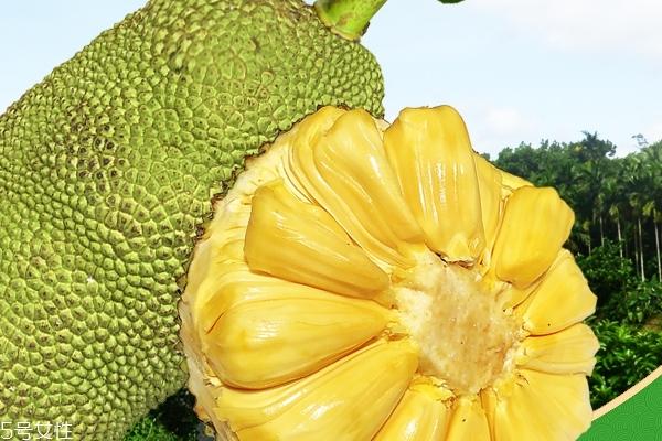 菠萝蜜为什么不能和蜂蜜一起吃 会导致腹胀