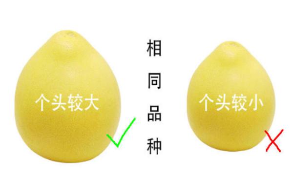 柚子有酒精味还能吃吗 会引起肠胃不适