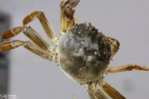 大闸蟹是什么颜色的 惹人喜爱的青壳蟹