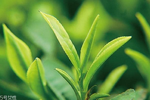 绿茶为什么不能用开水 2个主要原因