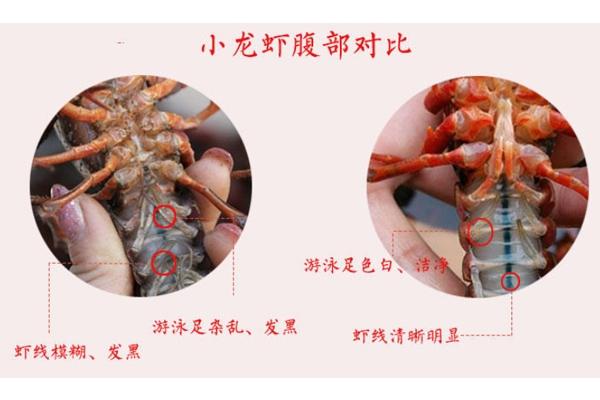 小龙虾腹部发黑能吃吗 脏水养的不要吃