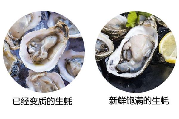 如何分辨生蚝肉质 变质和新鲜对比图