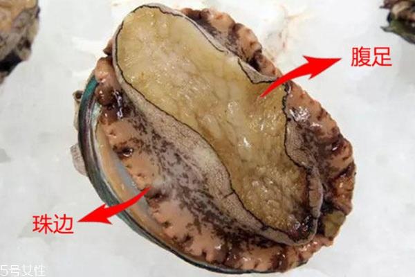 鲍鱼腹足是哪个部位 鲍鱼腹足图片
