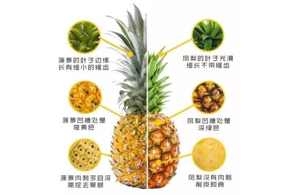 凤梨和菠萝一样吗 凤梨和菠萝对比图