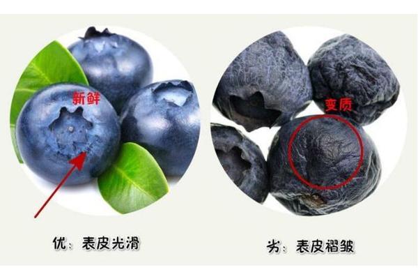 蓝莓硬的好还是软的好 优质蓝莓很结实