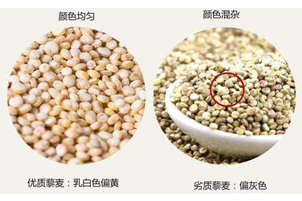 藜麦什么颜色营养最高 不同颜色营养差别并不大