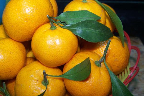 橘子什么颜色的好吃 橘子颜色变化过程