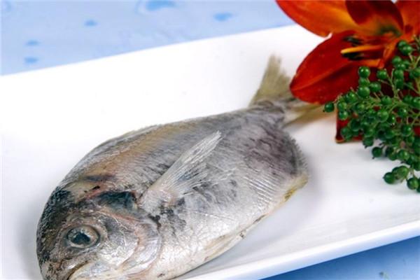 鲳鱼有几种种类 你最爱哪一种
