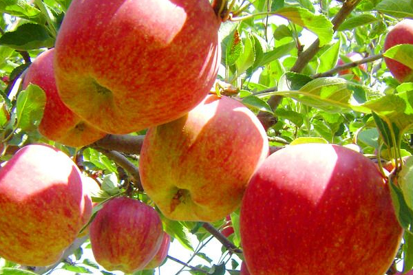 苹果上蜡能吃吗 工业蜡含铅汞