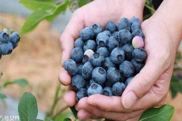孕妇能吃蓝莓吗 来月经可以吃蓝莓吗