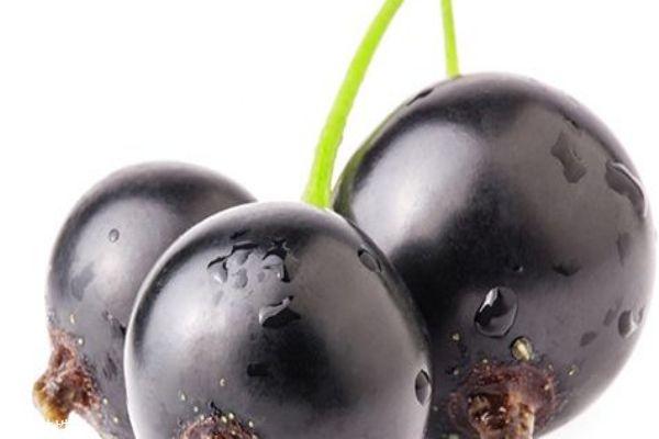 黑加仑和葡萄的区别 黑加仑的功效和作用