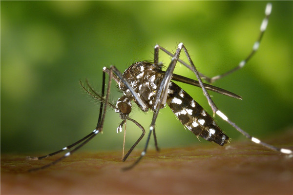 夏季驱蚊防蚊小妙招 防蚊这么简单