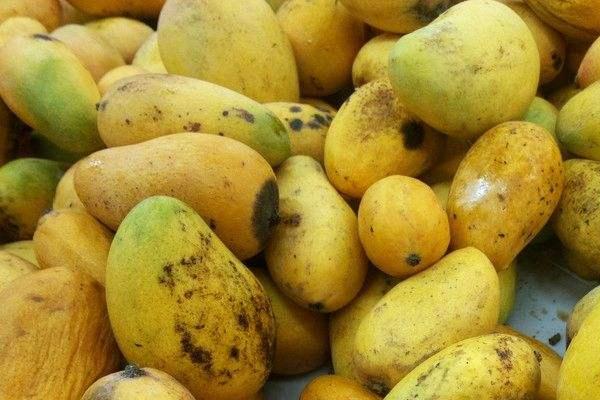芒果果皮长黑斑能吃吗 口感发酸不好吃