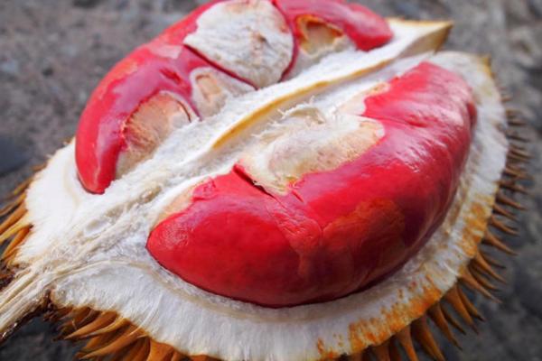 榴莲哪个品种最好吃 苏丹王vs红肉vs猫山王
