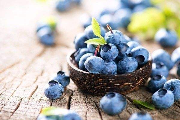 蓝莓品种哪个好 4大品种pk