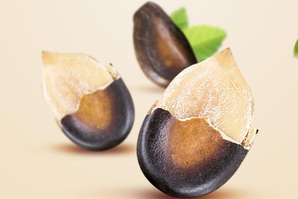 西瓜子为什么那么大 特殊的品种