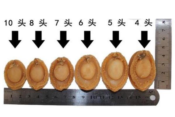 干鲍鱼头数是什么意思 一斤里含有几只干鲍鱼