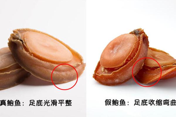鲍鱼与石鳖的区别 鲍鱼与石鳖对比图