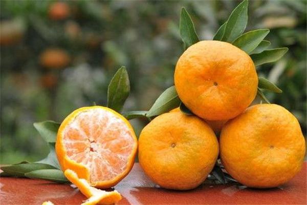 椪柑是丑橘吗 是两个品种