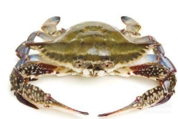 三门青蟹是海蟹吗 三门青蟹和阳澄湖大闸蟹的区别