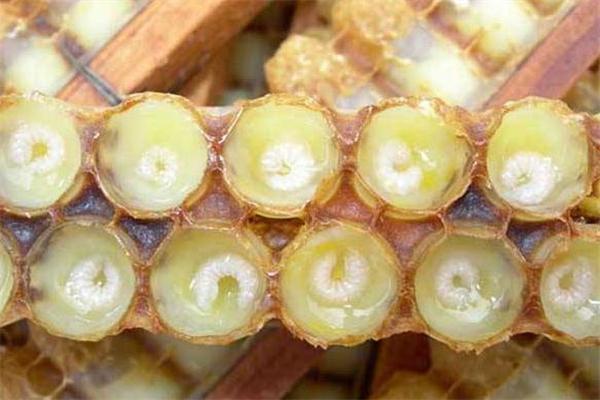 月经期可以吃蜂王浆吗 适量食用有好处