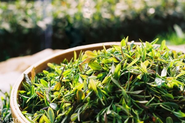 崂山绿茶价格多少钱一斤 崂山绿茶价格