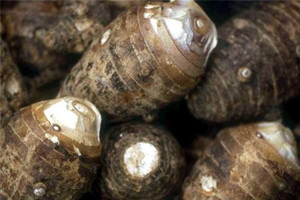 荔浦芋头的功效与作用 增强免疫力