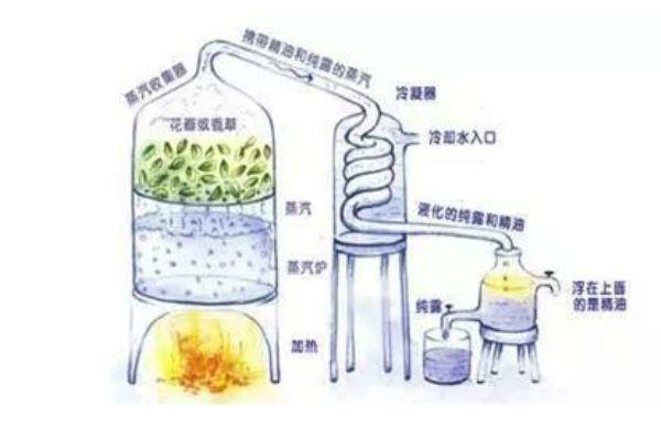纯露可以用矿泉水稀释吗  稀释的比例