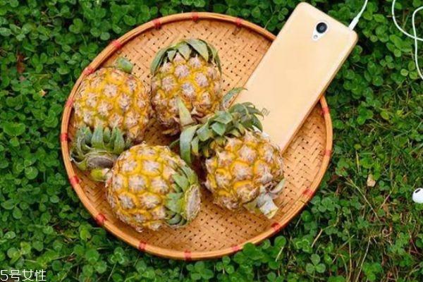 泰国小菠萝多少钱 泰国小菠萝功效与作用
