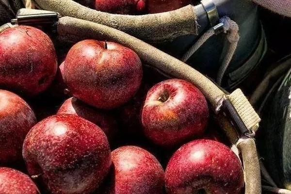 睡觉前吃苹果好吗 苹果的好处