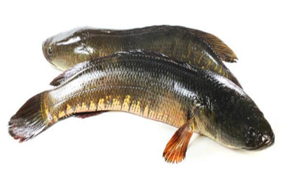 黑鱼可以生吃吗 黑鱼好处
