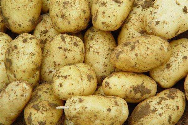 土豆可以去眼袋吗 土豆去眼袋怎么做