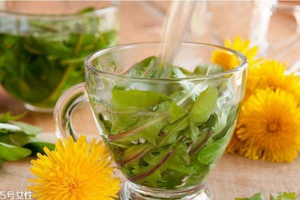 蒲公英泡水喝的功效 经常喝蒲公英的五大好处
