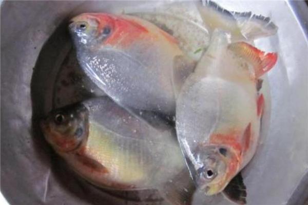 红鲳鱼多少钱一斤 价格并不贵