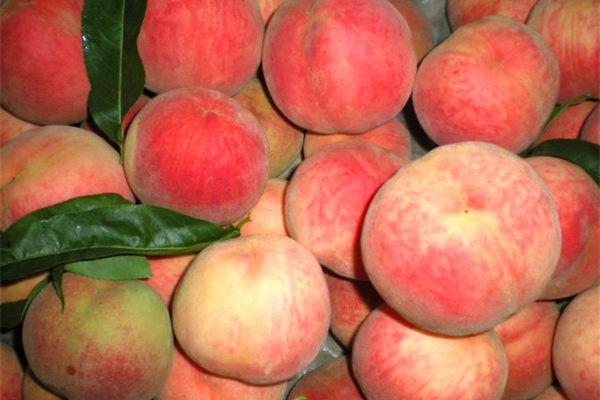 桃子可以和酸奶一起吃吗 桃子和酸奶一起吃作用