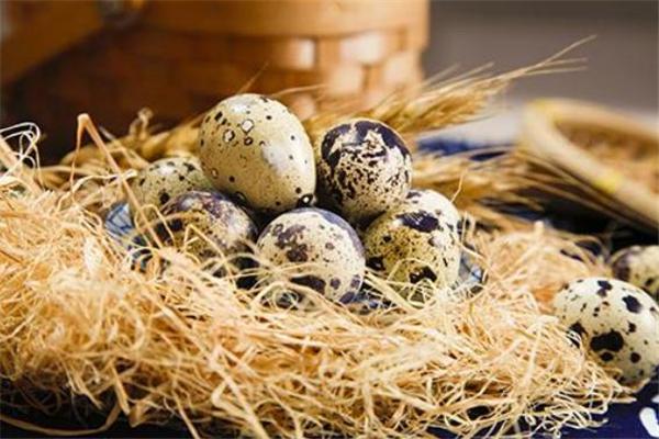 煮鹌鹑蛋用什么茶叶 茶叶煮鹌鹑蛋做法