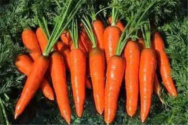 胡萝卜可以和西红柿一起吃吗 胡萝卜的营养价值
