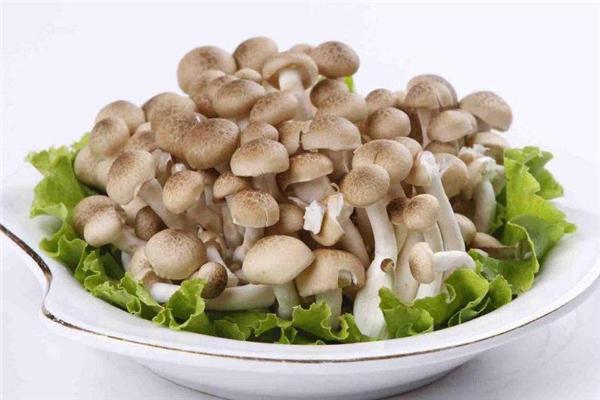 蟹味菇怎么做好吃 蟹味菇的做法大全